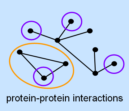 protein interaction